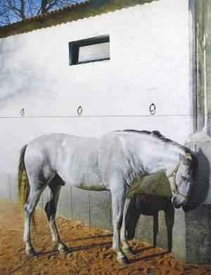 'Caballo blanco', Andrés Castellanos García ( , 190 x 146 )