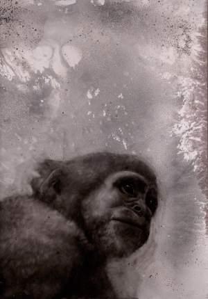 'Macaco pensante', Juan Perdiguero               ( Tinta sobre papel emulsionado, 121 x 86 )